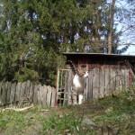 bluboo-picasso-foto-4