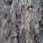 bluboo-picasso-foto-7